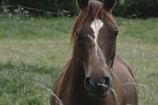 Free Horse, Mane, Bridle, Mare Stock Photos - 101013113