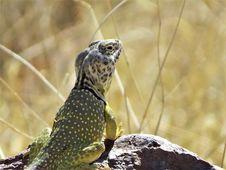 Free Reptile, Terrestrial Animal, Scaled Reptile, Fauna Stock Image - 101013141