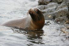 Free Seals, Mammal, Fauna, Marine Mammal Stock Photography - 101013812