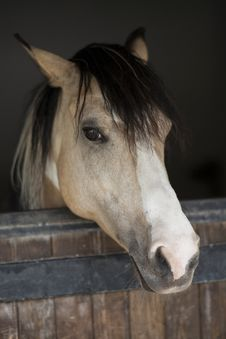 Free Horse, Bridle, Mane, Horse Like Mammal Royalty Free Stock Photography - 101014027