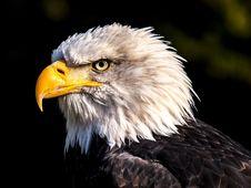 Free Beak, Bird Of Prey, Eagle, Bird Stock Photography - 101016182