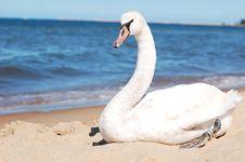 Free Swan, Water Bird, Ducks Geese And Swans, Bird Stock Image - 101016281