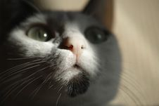 Free Cat, Whiskers, Face, Black Royalty Free Stock Photography - 101016757