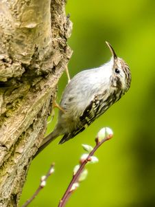 Free Bird, Fauna, Beak, Wildlife Royalty Free Stock Photography - 101017197