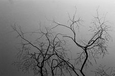 Free Branch, Tree, Black, Black And White Royalty Free Stock Image - 101017346