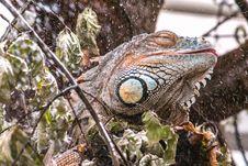 Free Iguana, Reptile, Scaled Reptile, Iguania Royalty Free Stock Photo - 101017375