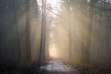Free Fog, Forest, Mist, Atmosphere Stock Images - 101017654