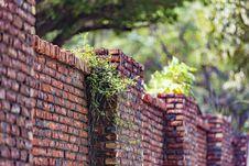 Free Brick, Wall, Brickwork, Leaf Stock Image - 101018121