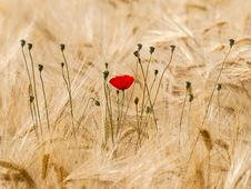 Free Ecosystem, Flower, Field, Grass Family Stock Images - 101018504