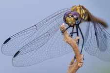 Free Insect, Invertebrate, Dragonfly, Macro Photography Stock Image - 101019921