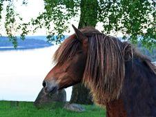 Free Horse, Bridle, Mane, Pasture Stock Photo - 101023800