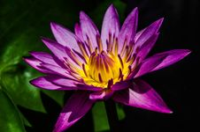 Free Flower, Flora, Purple, Yellow Royalty Free Stock Photography - 101025297