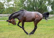 Free Horse, Stallion, Mare, Pasture Royalty Free Stock Photography - 101025377