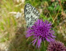 Free Butterfly, Moths And Butterflies, Brush Footed Butterfly, Flower Stock Image - 101026501