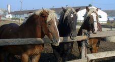 Free Horse, Horse Harness, Horse Like Mammal, Mustang Horse Royalty Free Stock Photos - 101026618