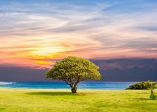 Free Sky, Nature, Tree, Morning Royalty Free Stock Photos - 101027038