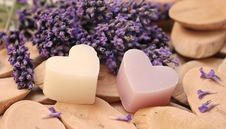 Free Purple, Lavender, Lilac, Violet Stock Photos - 101029063