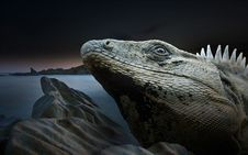 Free Reptile, Iguana, Iguania, Scaled Reptile Royalty Free Stock Photo - 101029545