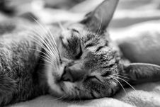Free Cat, Whiskers, Black And White, Mammal Stock Images - 101029554