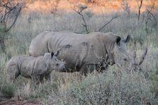 Free Rhinoceros, Wildlife, Terrestrial Animal, Grassland Stock Photos - 101029753