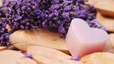 Free Lilac, Lavender, Purple, Violet Stock Photography - 101029992