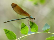Free Insect, Damselfly, Dragonfly, Dragonflies And Damseflies Stock Photos - 101030163