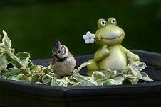 Free Fauna, Amphibian, Frog, Organism Royalty Free Stock Photography - 101030437