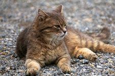 Free Cat, Mammal, Small To Medium Sized Cats, Wild Cat Royalty Free Stock Photo - 101030555