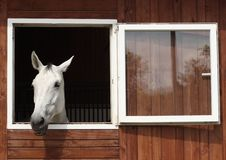 Free Horse Like Mammal, Horse, Stable, Window Stock Image - 101081331