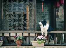Free Photograph, Vertebrate, Window, Dog Like Mammal Royalty Free Stock Photos - 101086908