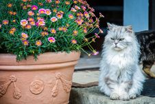Free Cat, Flower, Small To Medium Sized Cats, Plant Stock Photos - 101088383