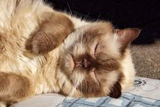 Free Cat, Whiskers, Small To Medium Sized Cats, Fur Stock Images - 101088714