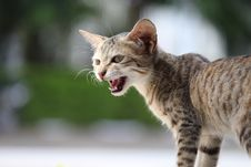 Free Cat, Mammal, Small To Medium Sized Cats, Fauna Stock Images - 101092294