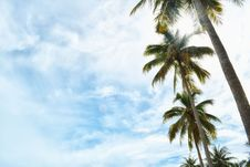 Free Sky, Cloud, Tree, Palm Tree Royalty Free Stock Image - 101092666