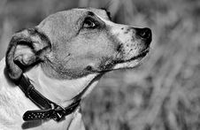 Free Dog, Black And White, Dog Breed, Nose Stock Photos - 101094193