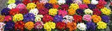 Free Flower, Plant, Flowering Plant, Floristry Stock Image - 101095791