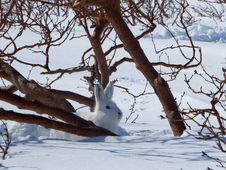 Free Tree, Snow, Winter, Branch Stock Images - 101096874