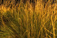 Free Grass, Vegetation, Ecosystem, Grass Family Royalty Free Stock Image - 101097696