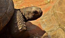 Free Tortoise, Terrestrial Animal, Turtle, Fauna Stock Photography - 101098482