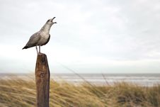 Free Bird, Fauna, Beak, Shore Royalty Free Stock Photos - 101099498