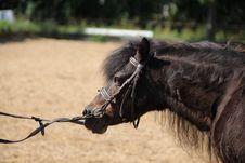 Free Bridle, Horse, Halter, Rein Stock Photo - 101099900