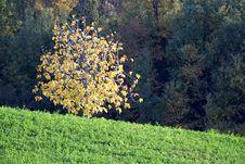 A Golden Tree Illuminated By The Sun Stock Photo