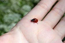 Free Ladybird Royalty Free Stock Image - 10112156