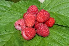 Free Raspberry Stock Images - 10112214