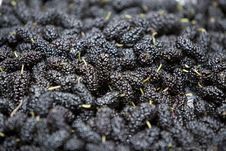 Free Mulberries Royalty Free Stock Image - 10112656