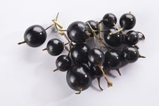 Free Black Currant Royalty Free Stock Images - 10114319