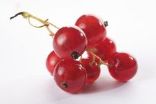 Free Red Currant Stock Photography - 10114402