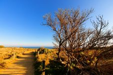 Free National Park Along Great Ocean Road Royalty Free Stock Photos - 10115628