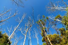 Free Bare Trees In Forest Stock Image - 10115811