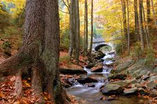 Free Autumn Creek Royalty Free Stock Image - 10119426